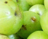 Health Benefits of Amla | Benefits of Amla | Amla Health Benefits