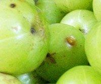 Health Benefits of Amla | Benefits of Amla | Amla Health Benefits